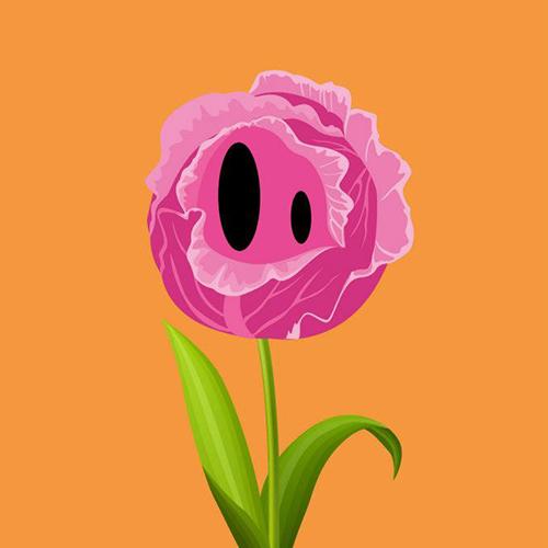 Un chou-fleur